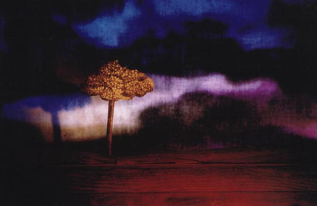 1998 Brancaleone 8